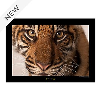 National Geographic Tiger Poster