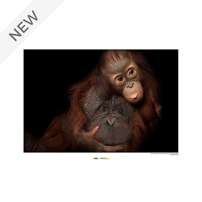 National Geographic Orangutan Poster