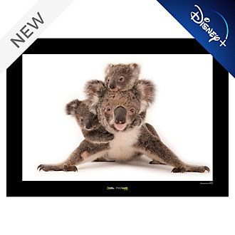 National Geographic Koala Poster